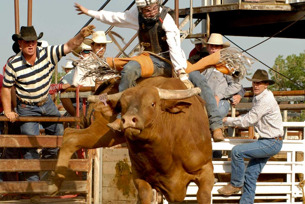 Bucking-Horse-Sale-Bull-Riding2