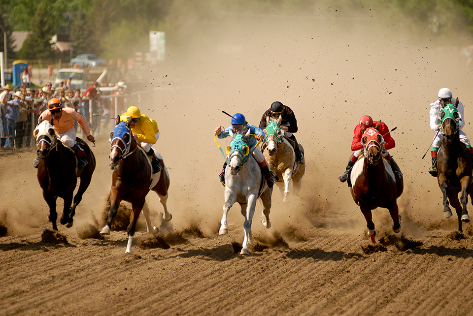 Bucking-Horse-Sale-Horse-Racing